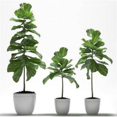 现代植物, 现代盆栽, 现代千亿国际app|娱乐网站, 盆栽, 植物, 现代