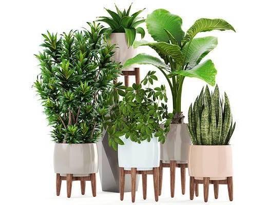 北欧, 植物, 盆栽