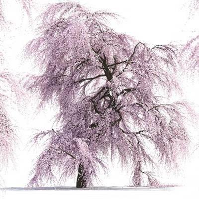 现代, 树木