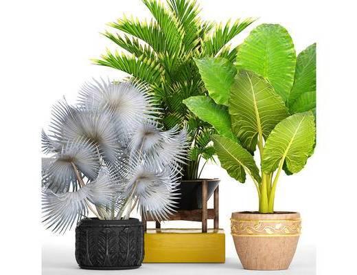 现代, 盆栽, 植物盆栽