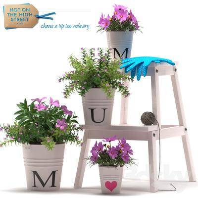 现代, 盆栽, 植物