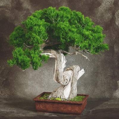 新中式, 盆栽, 植物