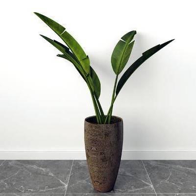 盆栽, 现代