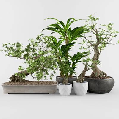 盆栽, 绿植, 植物