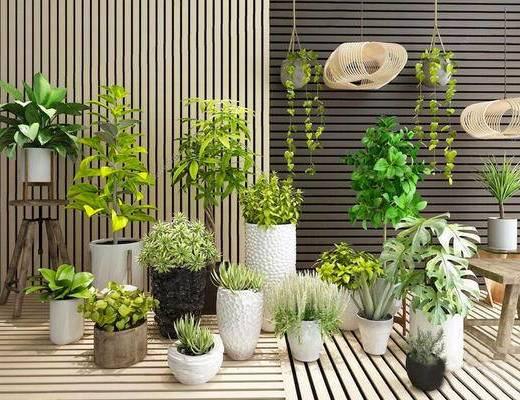 现代简约, 植物, 盆栽, 组合