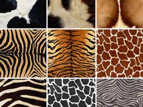 毛发, 动物毛发, 贴图, 毛毯, 地毯