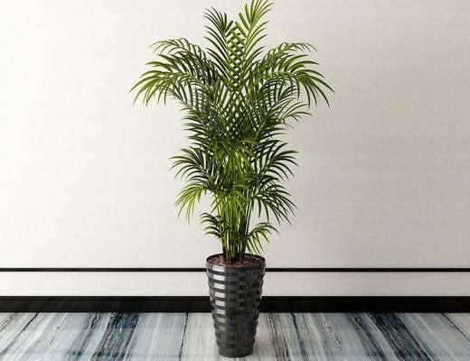 盆栽, 植物, 新中式