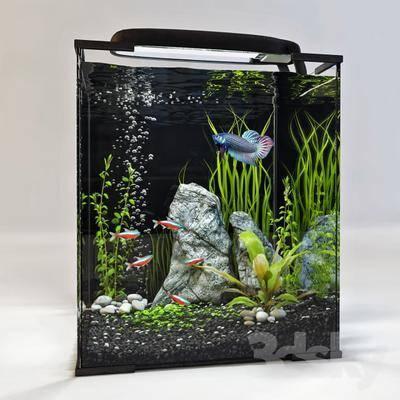 现代鱼缸, 鱼缸, 养鱼池