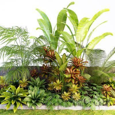 植物, 草, 现代