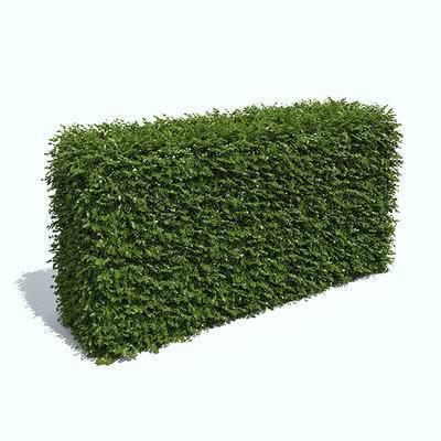 植物墙, 植物, 现代