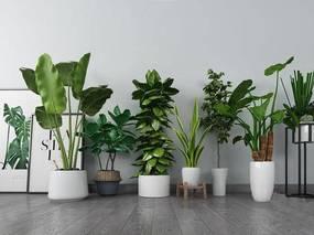 北欧简约, 植物盆栽