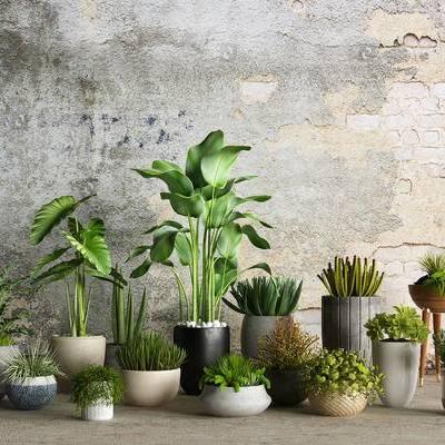 盆栽组合, 植物, 现代