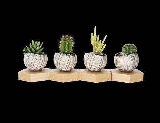 现代, 植物, 绿植, 盆栽