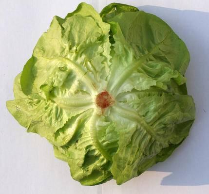 食物, 蔬菜貼圖, 現代, 蔬菜