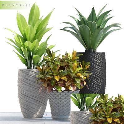 现代, 植物, 盆栽