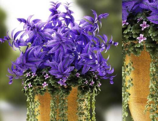 现代简约, 花瓶, 植物