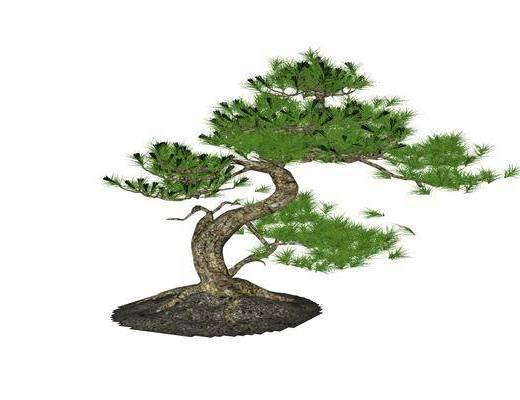 盆栽, 中式
