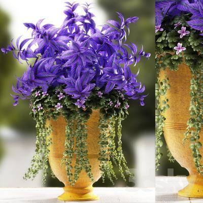 盆栽, 植物, 简欧