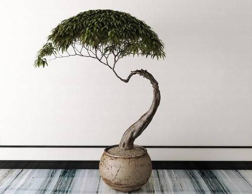 盆栽, 新中式