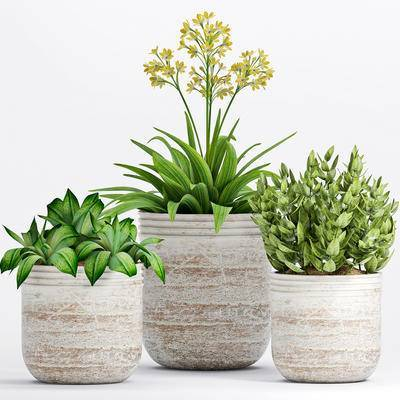植物, 盆栽, 现代