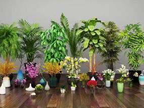 现代简约, 植物盆栽, 现代植物