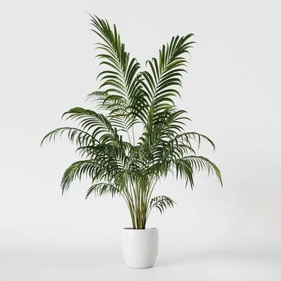 植物, 盆栽, 绿植