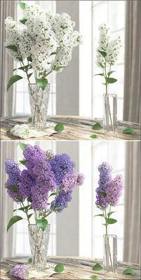 现代植物, 植物, 花瓶花卉