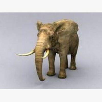 大象, 动物, 模型