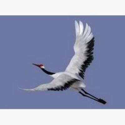 鸟, 动物, 模型, 飞行动物