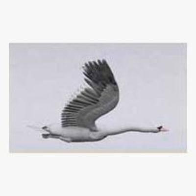 动物, 天鹅, 飞行, 鸟