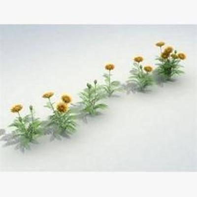 花卉盆栽植物, 花
