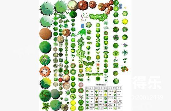 植物平面彩图1,ps素材
