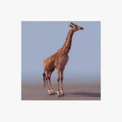 长颈鹿, 模型, 动物, 甫乳类