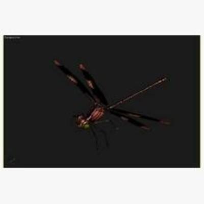 蜻蜓, 飞行动物, 动物