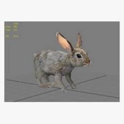 兔子, 动物, 模型