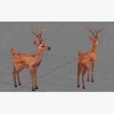 小鹿, 动物, 长颈鹿, 甫乳类, 模型