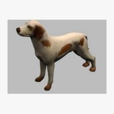 狗狗, 动物, 模型