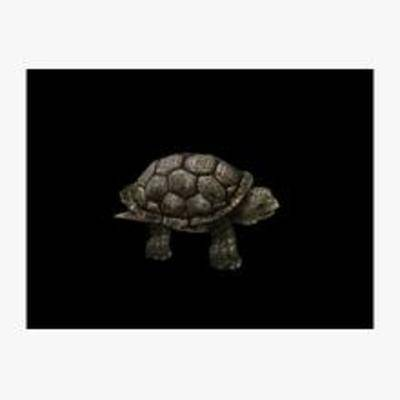 海龟, 动物