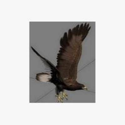 鹰, 动物, 飞行动物, 鸟