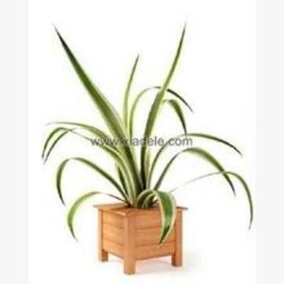 花卉盆栽植物, 摆设, 装饰品, 盆栽, 植物, 现代