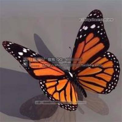 蝴蝶, 飞行动物, 动物