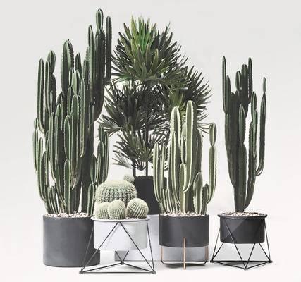 盆栽, 花盆, 植物