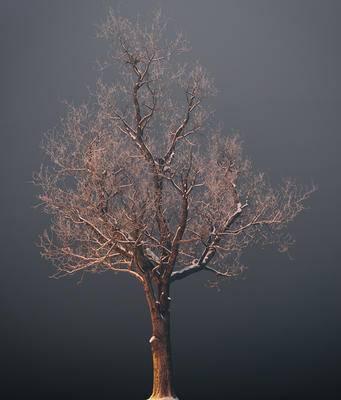 现代树木, 树木