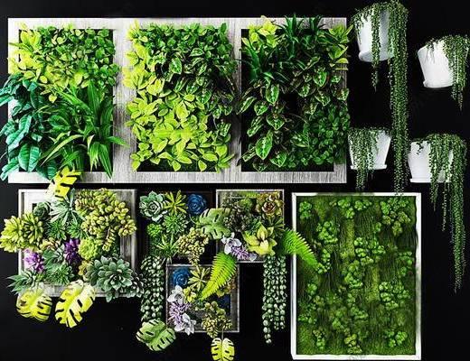 植画框, 植物墙
