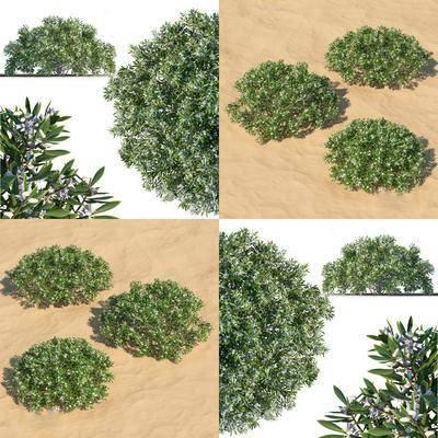 灌木绿篱, 植物, 现代