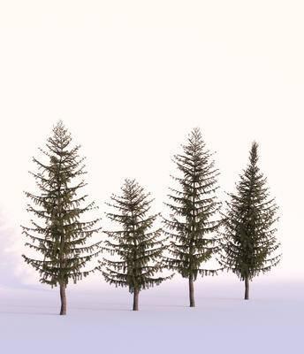 树木, 现代