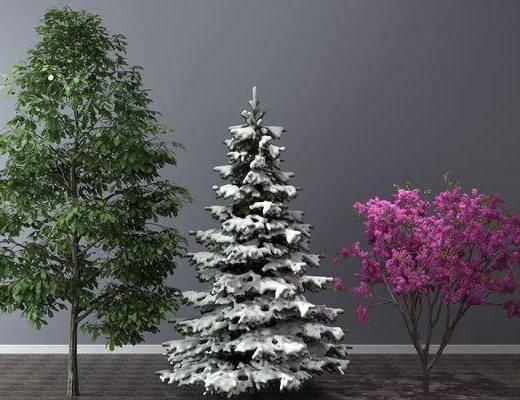盆栽, 植物, 树木