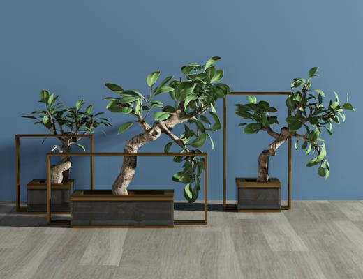 现代绿植, 植物, 盆栽, 装饰品