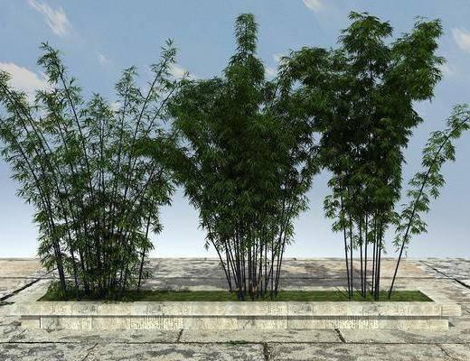 景观植物, 竹子