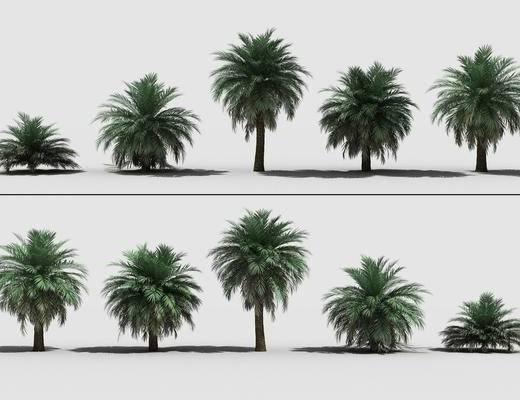 植物, 花草, 树木, 棕榈树